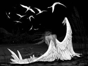 angels-falling-broken-feathers